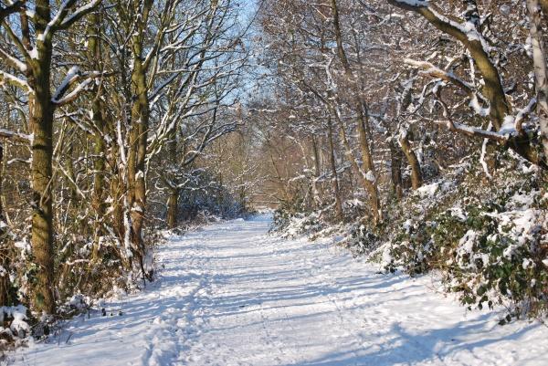 Schnee überall, auf Bäumen, Sträuchern und auch den Wegen. Sowas findet man sonst nicht in unserer Gegend.