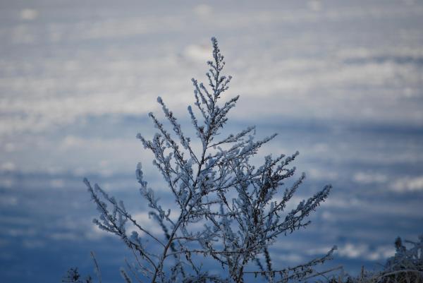 Verschneite Pflanze in Nahaufnahme