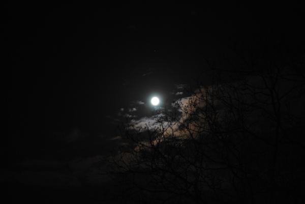 Mond, Baum und einige Wolken