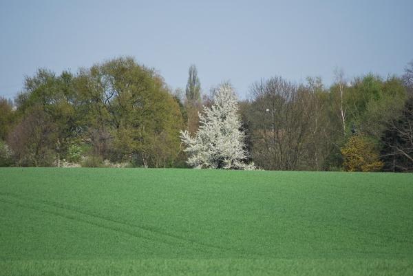 Bäume in weiß und grün