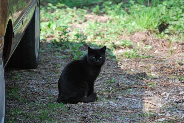 Eine schwarze Katze genießt den Frühling